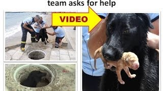 dog saves puppies after rescue team asks for help
