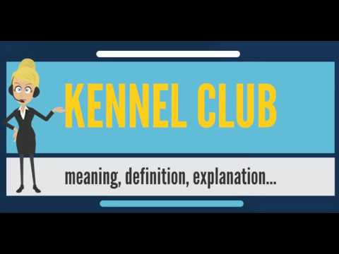 What is KENNEL CLUB? What does KENNEL CLUB mean? KENNEL CLUB meaning & explanation