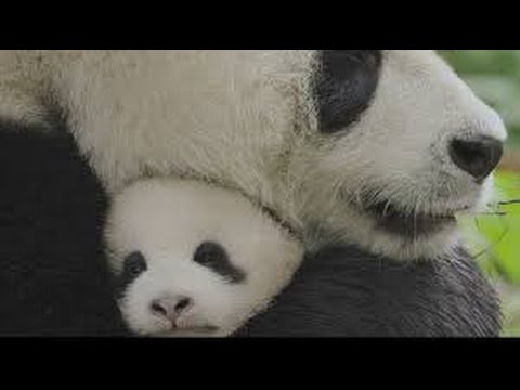 BORN IN CHINA Movie Trailer Disney Nature, Adventure Documentary   2017   YouTube
