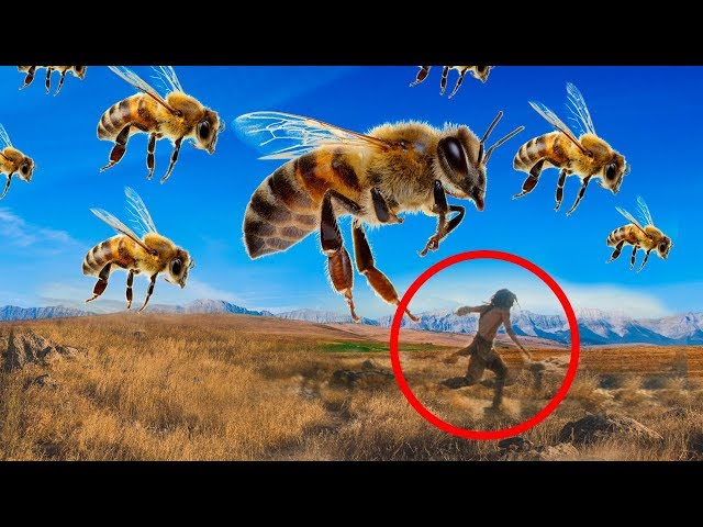 What Would Happen If Bees Disappear?!