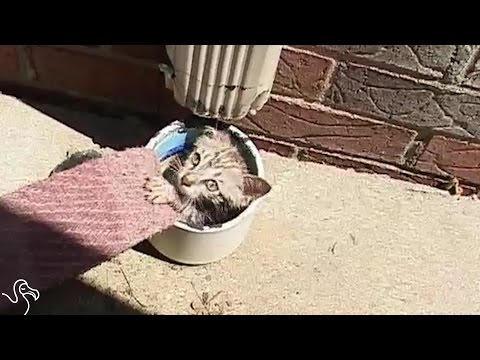 Kitten Stuck In Air Vent Gets Rescued And Finds A Family