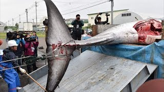 First whale killed as Japan resumes commercial whaling