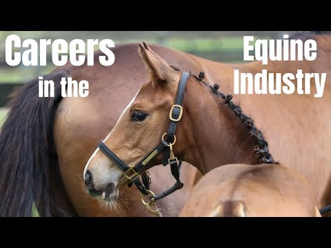 Careers In The Equine Industry | Part One