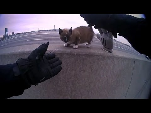 VIDEO: Body Cam Captures Officer Rescuing A Kitten From A Highway | Scott Sloan | 700WLW