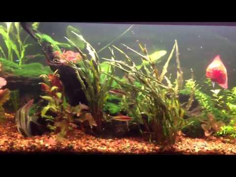 Otterbox/fish tank