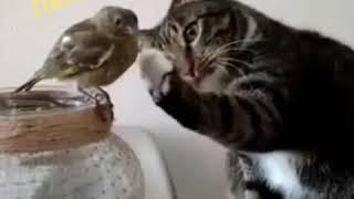 Когда кошка не охотник 👉 Нежное видео
