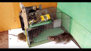 How to make a mouse trap for bait - Keri mousetrap video mouse trap video – rat trap easy #24