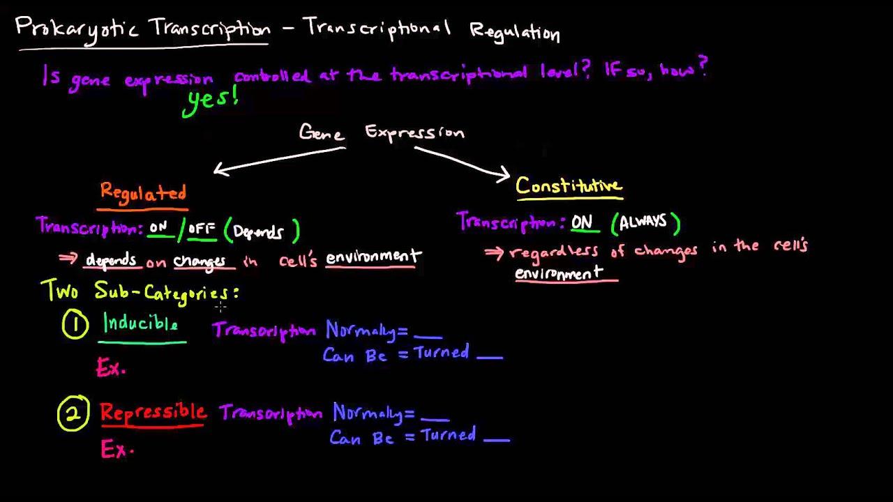 ebbb7b68e62 Prokaryotic Transcription (Part 1 of 5) - Transcriptional Regulation ...
