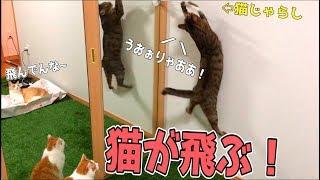 壁に猫じゃらしを貼り付けたら猫たちの反応が可愛かったwww thumbnail