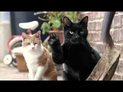 Три кота - Сборник лучших серий от Карамельки, Коржика и Компота