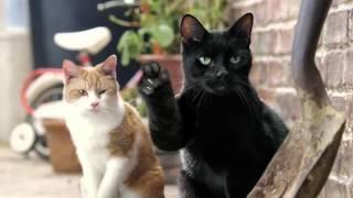 Реклама молока Cravendale   Коты с пальцами