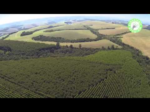 Brazil Forest (Groupe SLB) - Paraná Farm 1 - December 2013 [ENG]