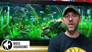 how to take care of a planted tank lights dosing fertilizers pressurized co2 water changes