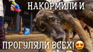 Гора гречки и школа волонтера в приюте Искра! Хороший приют для собак.