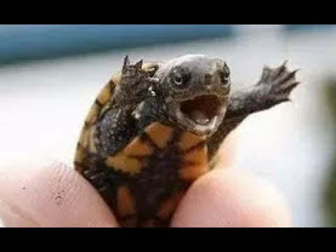 Funny and cute turtle videos compilation 2018 youtube - Cute turtle pics ...