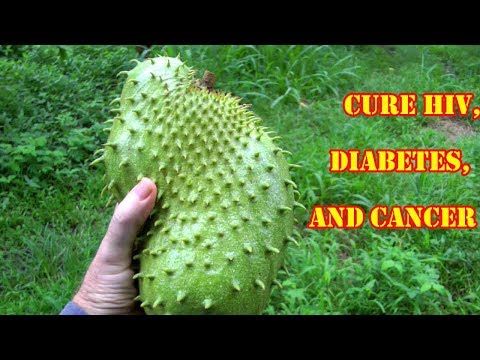 Doctors Are Shocked! This Plant Cure HIV, Diabetes, Cancer | Cure For All Diseases Except Death