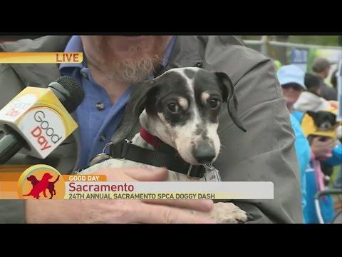 SPCA Doggy Dash