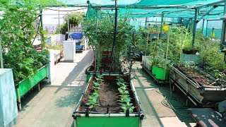 Beautiful Terrace Garden | I never purchased Vegetables from shop | Maadi Thottam