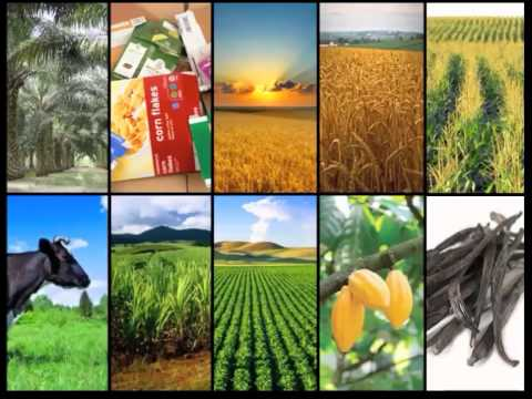 Frontiers: Frontiers on Food Sustainability