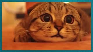 Коты смотрят фильмы ужасов