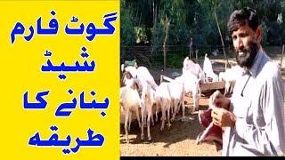 How To Make A Goat Farm Shed | goat shed ideas | goat shed estimate | goat shed | Urdu Hindi