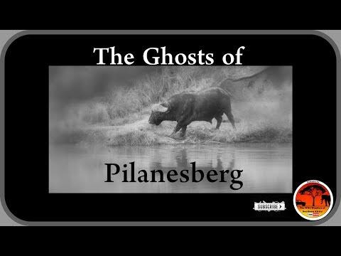 The Ghosts of Pilanesberg