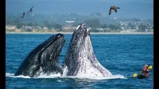 Синий кит. Животные для детей. Blue whale