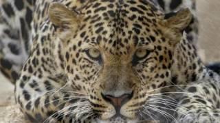 ANIMALES SALVAJES-FOTOS NARRADAS