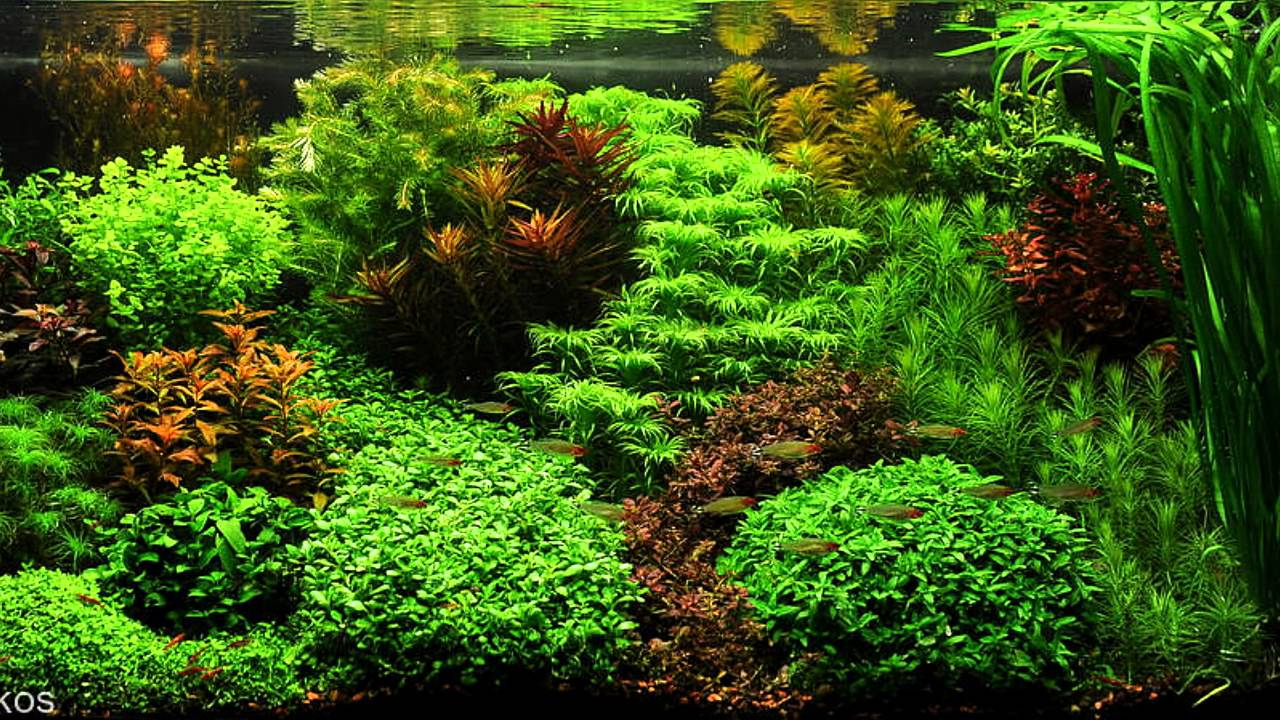 Dutch Aquascape Youtube