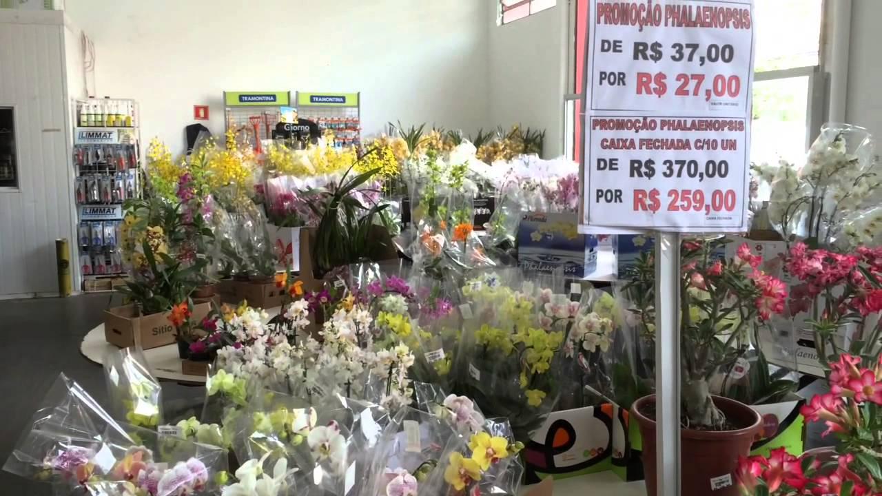 Onde comprar flores e plantas bonitas e baratas em s o for Plantas baratas