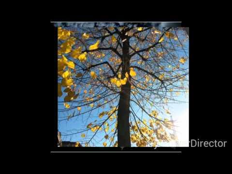 Limelight ~ Just A Gent ~ lyrics