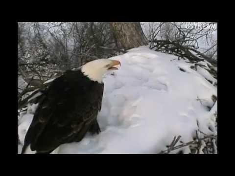 Decorah Eagles Dad Calls Out Alarm 1-20-12  5:03pm CST