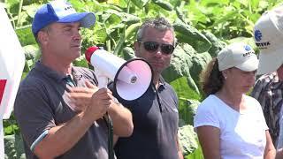 CORTEVA AGRISCIENCE™ - слънчоглед за високи добиви - Тръстеник