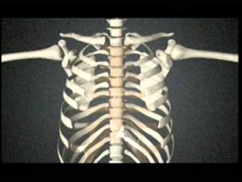 Funktionelle Anatomie - YouTube