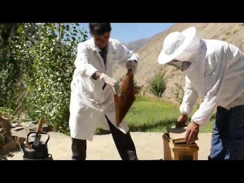 Lord of the Bees: locally produced honey in Tajikistan