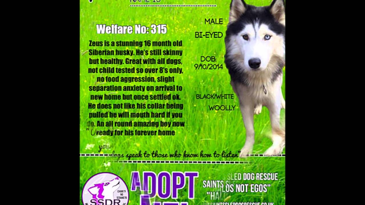 Dogs Available For Adoption From Saints Sled Dog Rescue April 2016