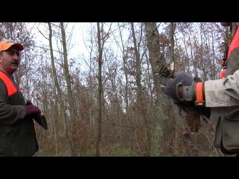 Fermadan Parlayan Çulluklar The Woodcocks Flush from the Point