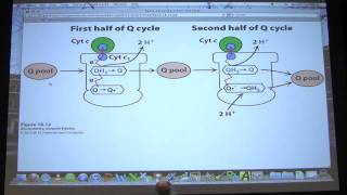 #33 Biochemistry Electron Transport/Oxidative Phosphorylation Lecture for Kevin Ahern