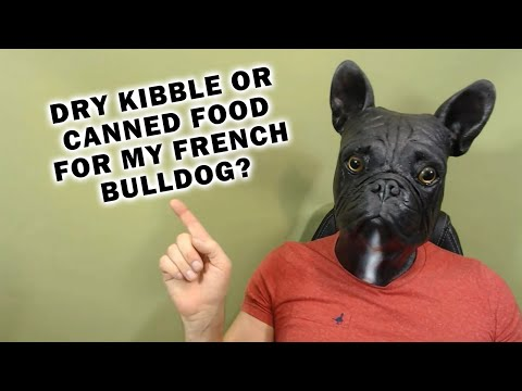 What Should I Feed My French Bulldog? Canned or Dry Kibble