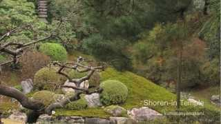 青蓮院門跡と庭園 Shoren-in Temple & Garden Kyoto Jpan