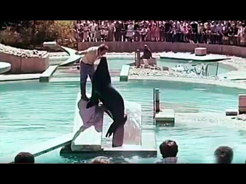 200 años de un zoo - La Real Casa de Fieras de Madrid - Zoo Aquarium de Madrid (1977)