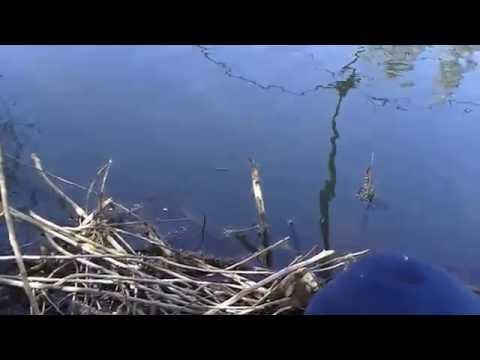 Düzen (Çökertme) ile balık avı Seydişehir