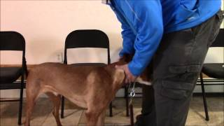 How To Teach Your Dog To Enjoy Wearing A Collar - 914-469-2070