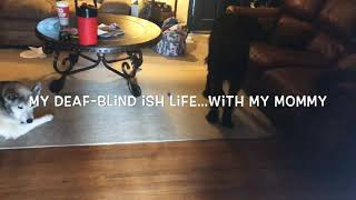 Deaf-Blind Mother | Non-profit work | A Wigfall Story
