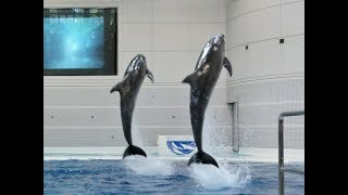 ★かごしま水族館★イルカショー①「イルカの時間」★いおワールド