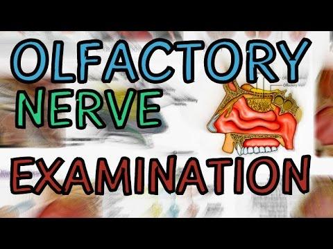 Olfactory Nerve - Examination - CN 1 Exam - Cranial Nerve 1