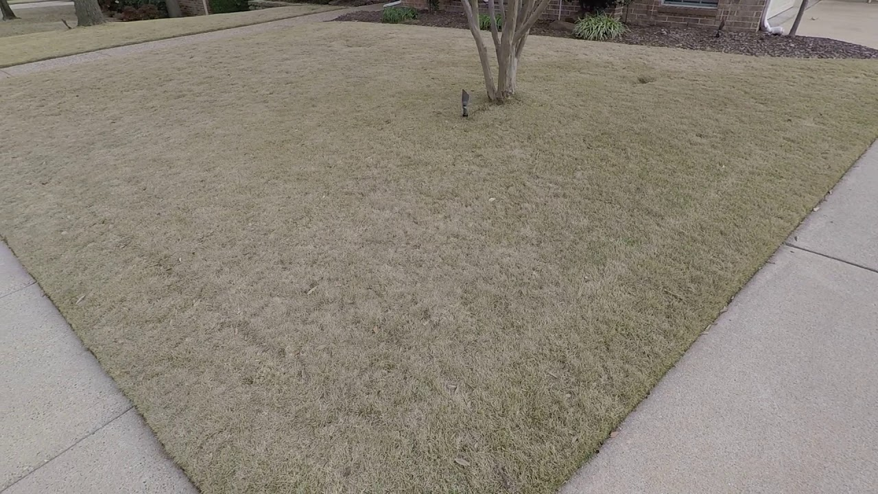 How Does Zeon Zoysia In Dallas Area Look When It Is Dormant The Winter