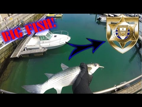 Illegally Fishing Marina's in Portugal for BIG Lizafish! (Almost Caught By POLICE!!!)