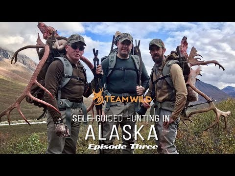 Self-guided Moose & Caribou Hunting In Alaska: Episode 3 - Butchering Big Bulls & Packing Out