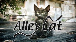 Мини прохождение игры - Alley Cat / Дворовой Кот